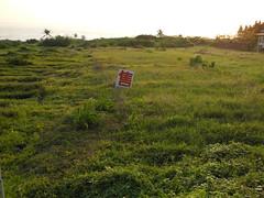 石梯坪待售的農地。