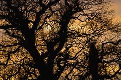 [フリー画像素材] 自然風景, 樹木, 朝焼け・夕焼け ID:201303150400