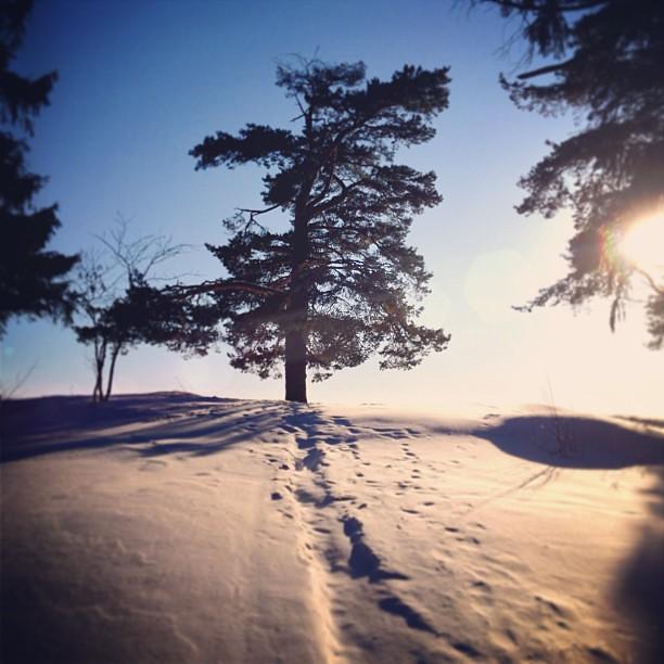#marzo #neve #primavera #cielo #sole #sun #spring #snow #passeggiare #walk #today #weekend #pietroburgo #pitersburg #spb #sky #colore