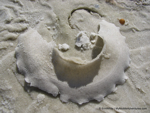 Sand collar on the shore at Bunche Beach