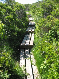 Wooden Path on Damariscove