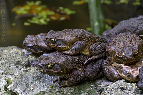 toad stacks