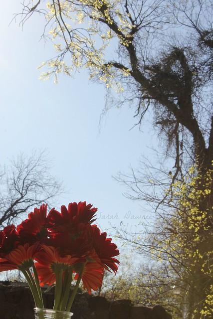 Monday Flower2...