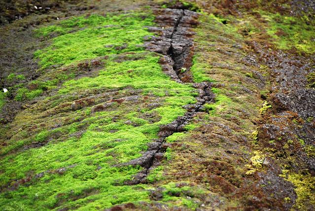 Cracked Seaweed