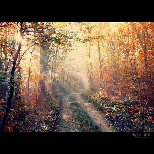 autumn trees leaves sunshine fog forest woods ligth rays mygearandme rememberthatmomentlevel1