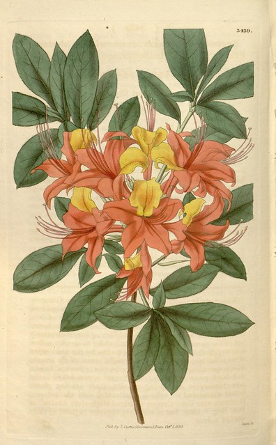 Curtis's botanical magazine v.62 [new ser.:v.9] (1835)