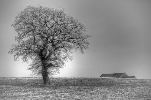 A Tree and a Farm