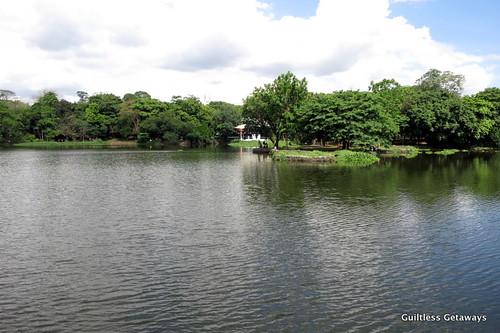 manmade-lake-water-lilies.jpg