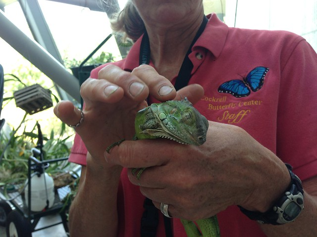 Our new Cockrell Butterfly Center resident, Chico, receives a pet from Director Nancy Greig