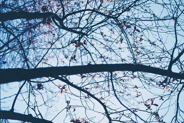Arbre i fulles i branques