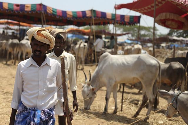 Magadi cattle fair