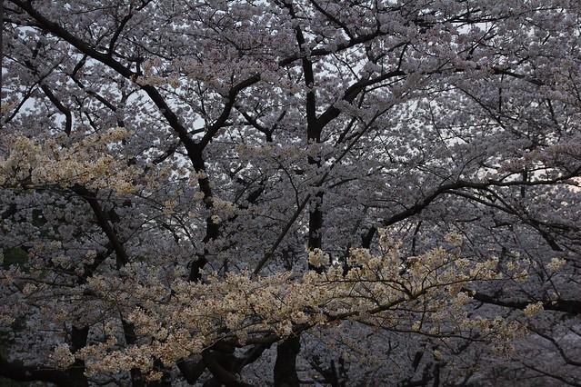 0049 - Parque Yoyogi