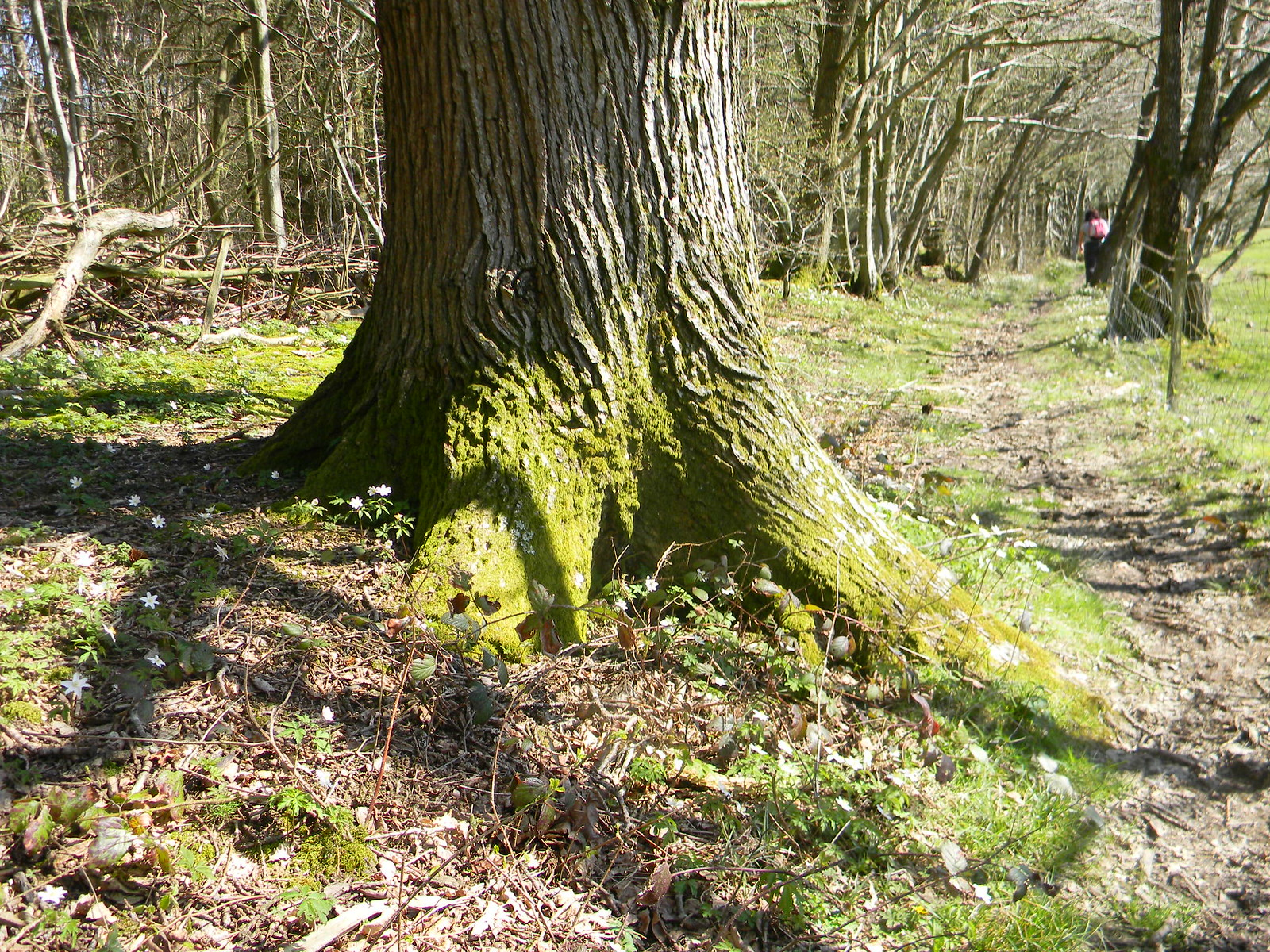 Treestump Robertsbridge to Battle
