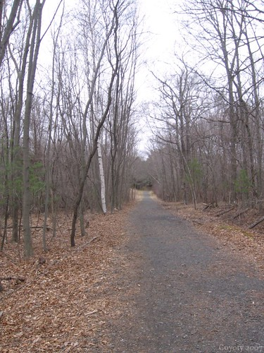 Gravel trail by Coyoty