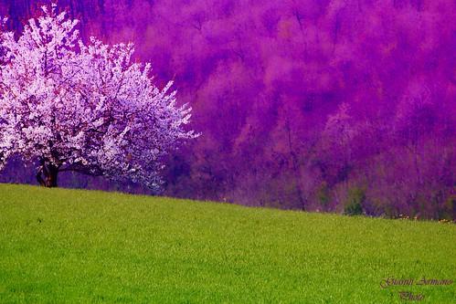 italy primavera nature colors photo spring italia foto natura piemonte di 18 aprile colori gianni alessandria colli 2013 armano tortonesi volpeglino