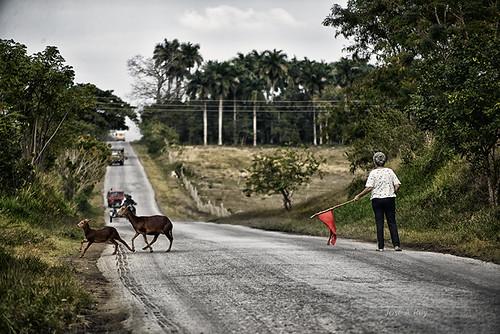 Paso Beatonal by Rey Cuba