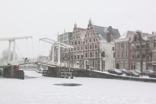 Haarlem Town