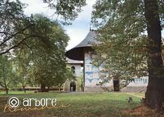 UNESCO: Painted Churches of Moldova: Arbore