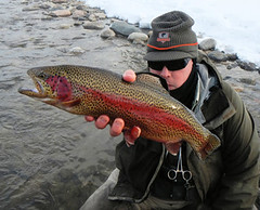 colorado-rainbow-trout