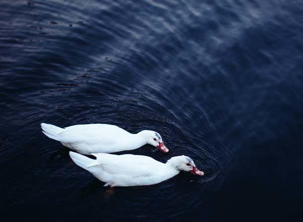 duck park 5a