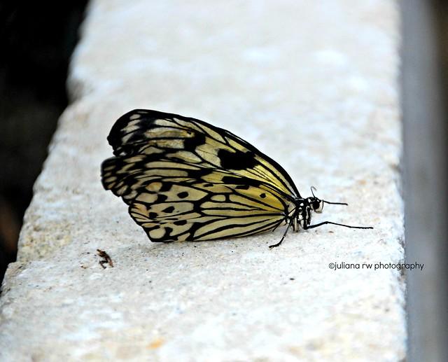 at Vlindertuin Vlindorado