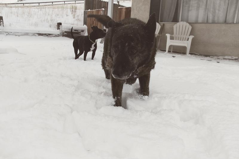 roxy-dog-in-snow