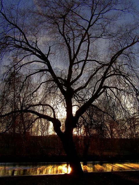 Golden winter reflections   [EXPLORE]