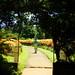 Royal Botanical Gardens, Pedadeniya, Sri Lanka