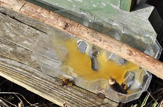 Honig Biene Bienen Imker Immen