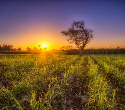 naturaleza sol arbol amanecer veracruz marzo hdr calido 2013 cã³rdoba caã±a canonrebelt2i