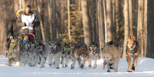 Dog team of Nicolas Petit of Girdwood