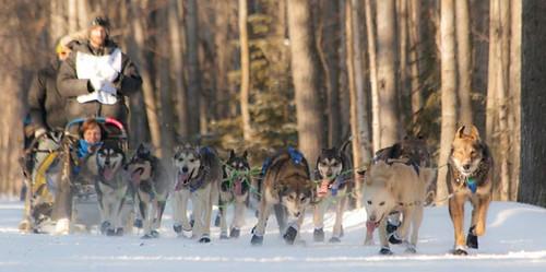 Dog team of Nicolas Petit of Girdwood