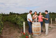 El mundo del vino mendocino sigue dando sorpresas