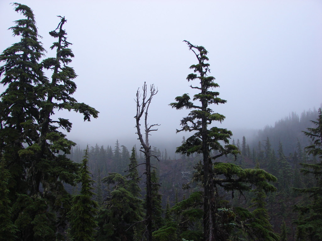 Cloudy day in the Three Sisters Wilderness