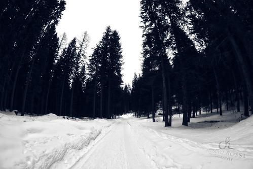 Cold, white, silent