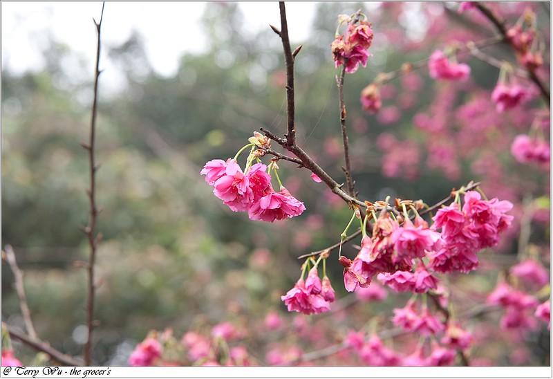 2013-02-14 三芝走春-14