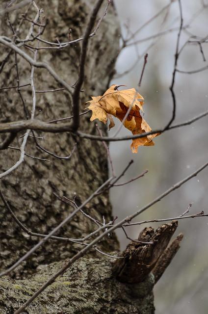 Hanging on til the End