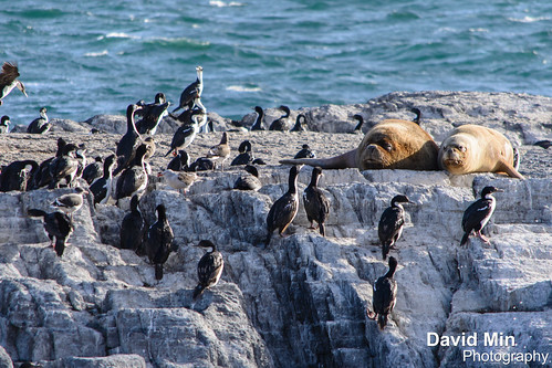 Ushuaia, Argentina - Sea Lions & Cormorants by GlobeTrotter 2000