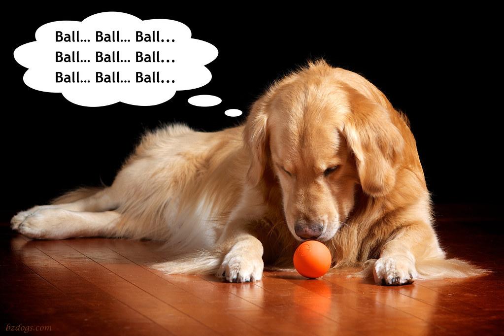Ball Brain