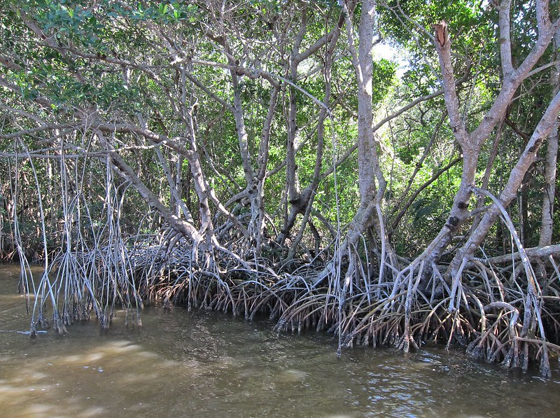 Everglades-BackcountryBoatTour - 6