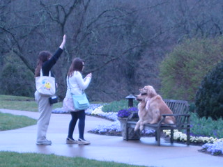 dog contest at Cheekwood