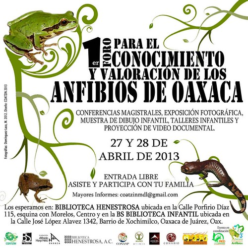 Anfibios de Oaxaca 04.2013