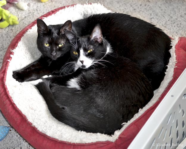 Mommy and baby kitties cuddling together in a cat bed, photo by Elizabeth Ruffing