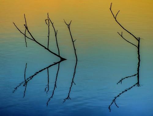 sunset sun reflection tree water river branch panasonic hudson reflexions jagendorf