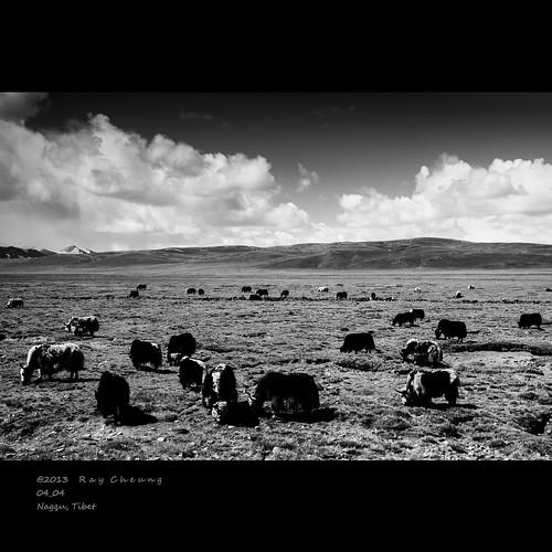 life china travel yak sky blackandwhite bw cloud mountain animal landscape sony tibet grassland za xizang a900 lhasatibet sonyalpha nagqu xizangtibet variosonnar247028za variosonnartdt28222470