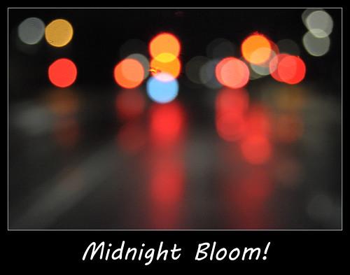 Midnight Bloom!