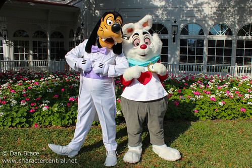 Goofy and the White Rabbit