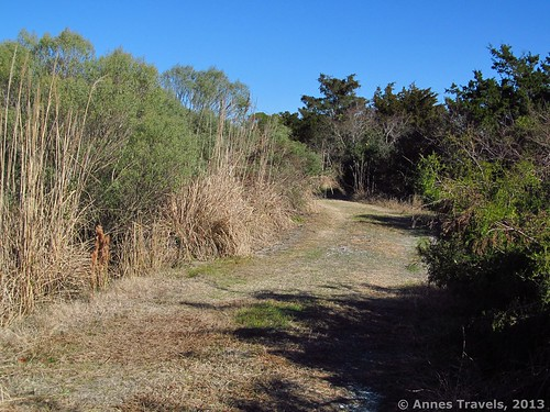 Near the beginning of the Marsh Loop near Sailfish Street Park, Holden Beach
