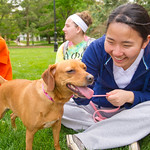 Puppies on the Quad -- The Humane Society of Central Illinois and Alpha Phi Omega service fraternity partnered to bring dogs to the quad during finals week to help relieve stress.
