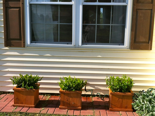New Boxwood and Planters